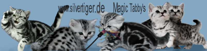 Magic Tabbys Banner-160-40