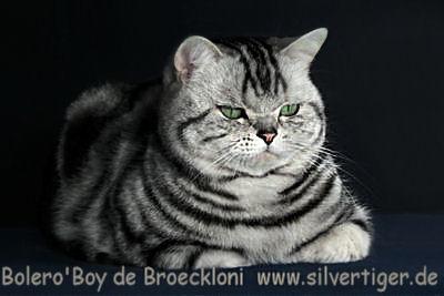 Bolero-Boy-de-Broeckloni