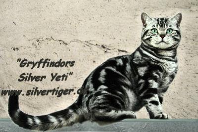 Gryffindors-Silver-Yeti