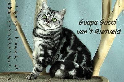 Guapa-Gucci-vant-Rietveld