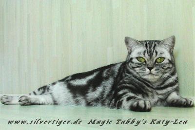 Magic-Tabbys-Silver-Katy-Lea