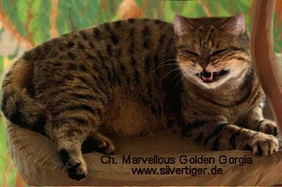 Marvellous-Golden-Gorgia