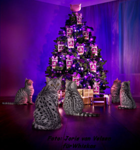 season Whiskas_Xmas-Plakat-600