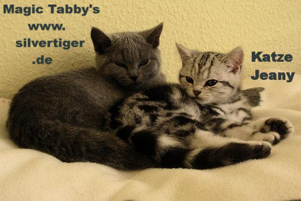 tabbys removed-Jeany
